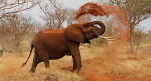 Read more about the article The Elephant