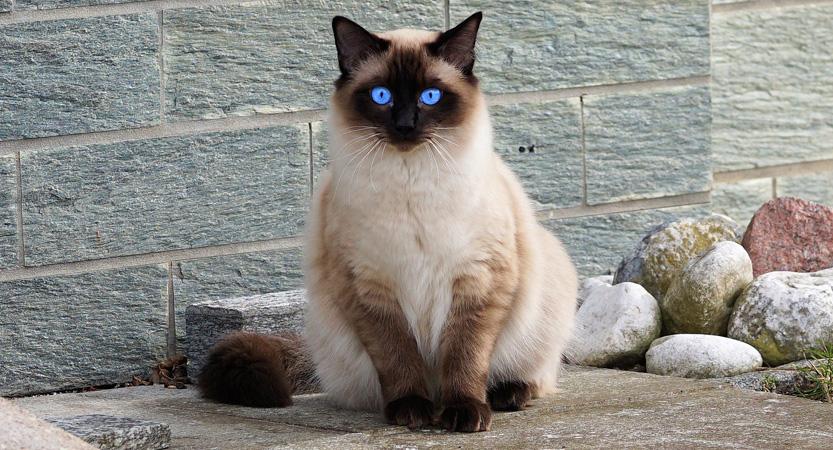 Read more about the article Bisakah saya melihat kucing saya lagi?